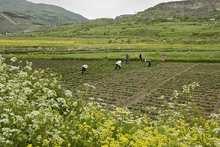 Աջակցություն գյուղական տնտեսություններին
