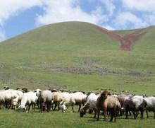 Կոոպերատիվը հնարավորություն է տալիս գյուղատնտեսական աշխատանքներն ավելի կազմակերպված ու համակարգված իրականացնել